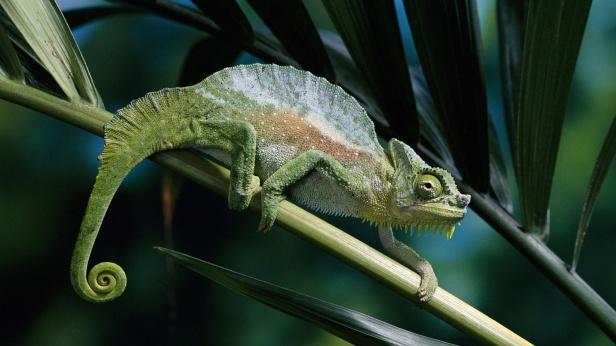chameleon_2048x1152