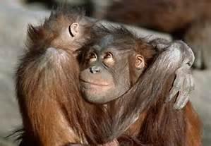 cute monkeys hugging